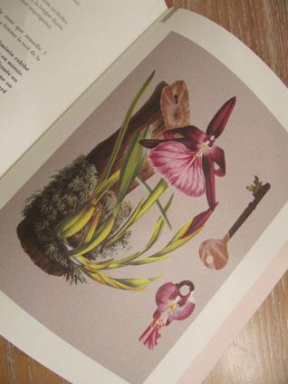 ô Orchidées !, Pascale de Trazegnies
