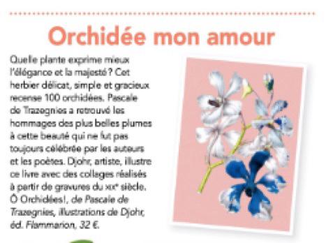 Orchidées Vie Pratique Féminin